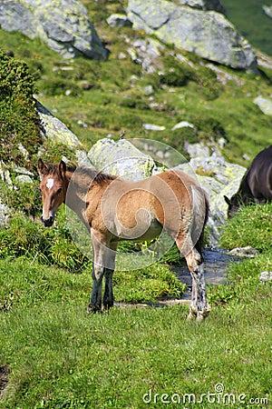 Wild colt on a brook bank