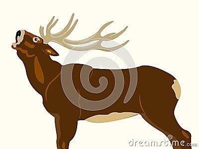 Wild deer with horn