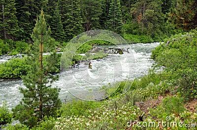 Wild Deschutes River