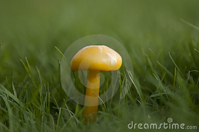 Wild english forest mushrooms growing in autumn