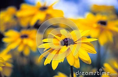 Wild färgrika blommor