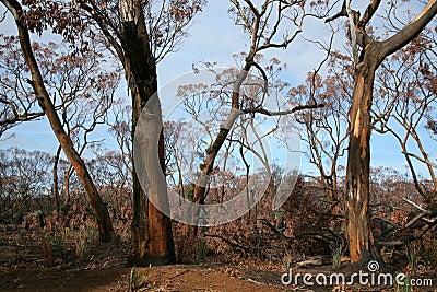 After a wild fire Australia