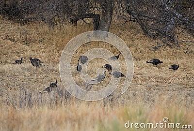 Wild flock
