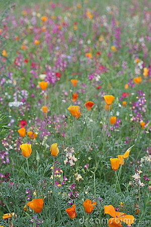 Wild flower meadow 3