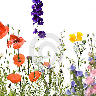 Free Wild Flowers Stock Photography - 2688842