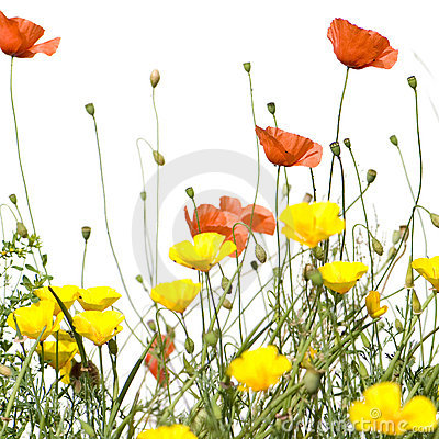 Free Wild Flowers Royalty Free Stock Image - 2688846
