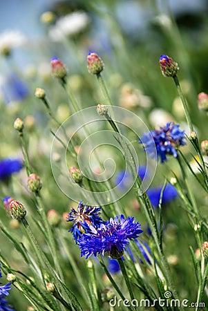 Free Wild Flowers Stock Photos - 28639433