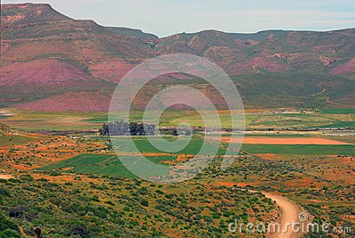 Wild flowers, Biedouw Valley, South Africa.