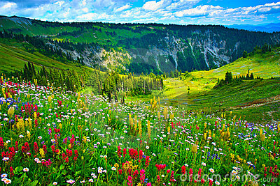 Wild flowers blooming on Mount Rainier