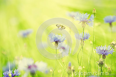 Wild flowers and butterfly flying in the sunlight