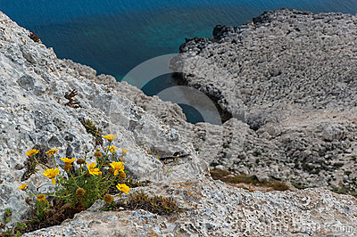 Wild flowers on cliffs