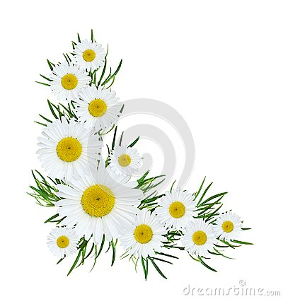 Free Wild Flowers Corner Composition Royalty Free Stock Photo - 107762345
