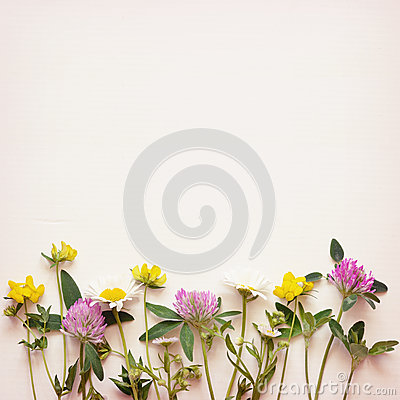 Free Wild Flowers Corner On Paper Background Stock Images - 86174954