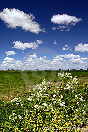 Free Wild Flowers, Fields, And Sky Royalty Free Stock Image - 2324226