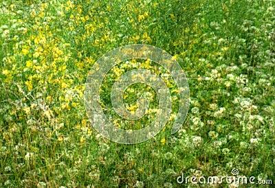 Wild flowers in green field