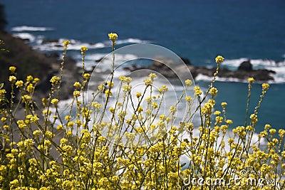 Wild flowers on Hwy 1