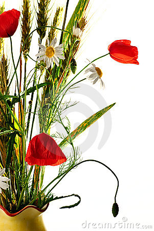 Free Wild Flowers Poppy Bouquet Stock Photography - 14676252
