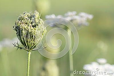 Wild flowers spring season