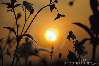 The wild flowers and sunset