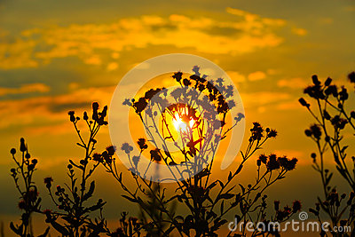 Wild flowers on sunset background