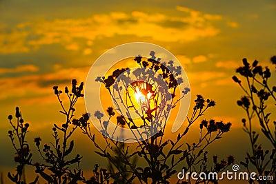 Wild flowers on sunset background