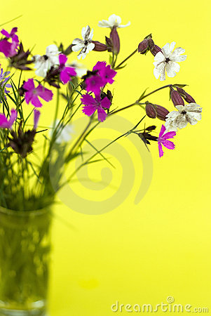 Wild flowers on a yellow background
