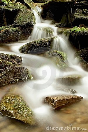 wild forest waterfall in the mountains