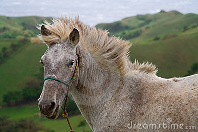 Wild and free horse