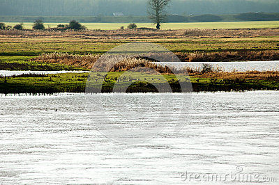 Wild gäss vid floden