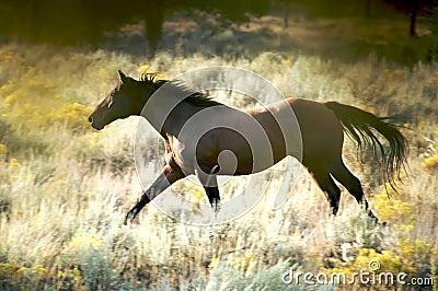 Wild Galloping Horse