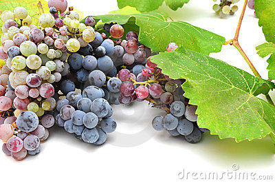 Wild Grape And Leaves