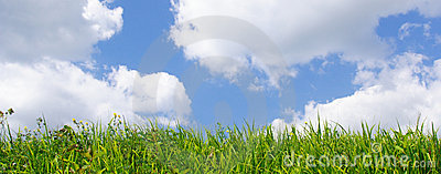 Wild grass and blue sky