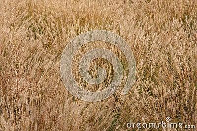Wild grass field