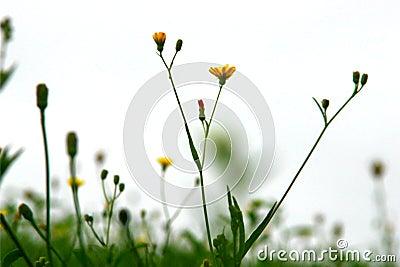 Wild Grasses in Motion