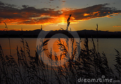 Wild grasses and sunset