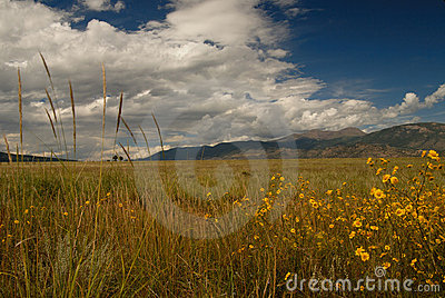 Wild Grasses Wild flowers