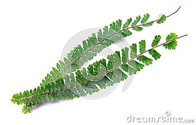 Wild green fern