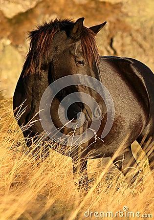 Wild häst