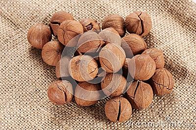 Wild hickory nuts