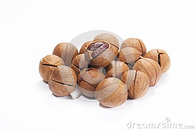 Wild hickory nuts
