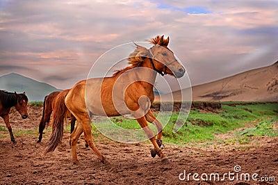 Wild Horse Running Fast Wild Horse Stock Photo...