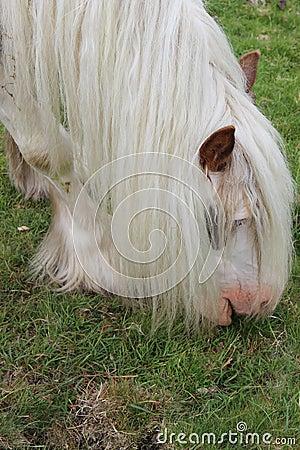 horse eating apple clipart wwwpixgoodcom good pix
