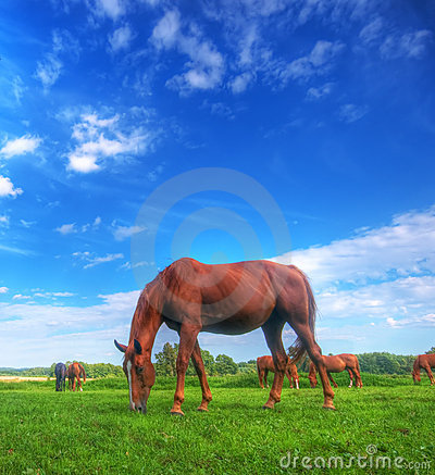 Wild horse on the field