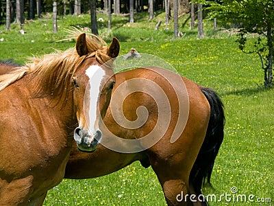 Wild horse look