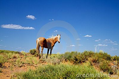 Wild horse in nature