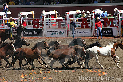 Wild horse round up Editorial Image
