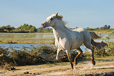 Wild Horse Running Royalty Free Stock Photos Image 19026408