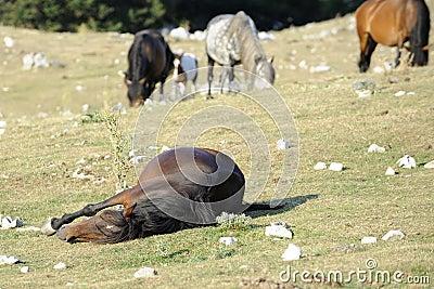 Wild Horse sleep