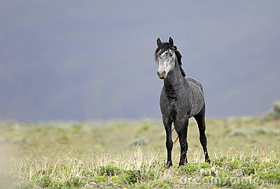 Wild horse standing alone