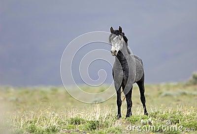 Wild horse standing alone
